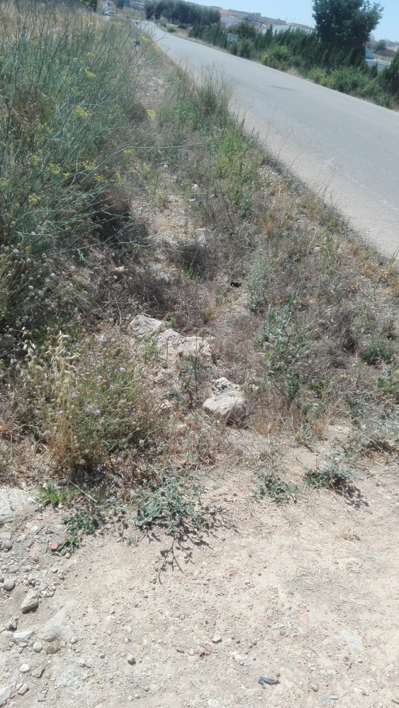 Comienzan los trabajos de la carretera CM-3222 Leda�a-Iniesta (Cuenca)